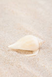 Neat seashell on the sandy beach Royalty Free Stock Images