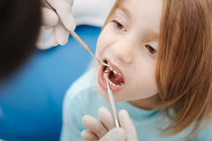 Neat skillful dentist checking patients teeth. Just a normal procedure. Cute brave little girl visiting her doctor for a checkup and behaving nicely while he Royalty Free Stock Photography