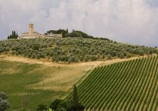 Neat Tuscany vineyard. Neat rows of vines in a Tuscan vineyard with olive trees and a church in the background Royalty Free Stock Photo