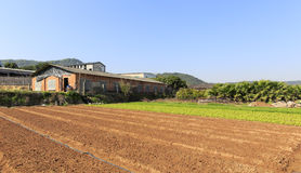Neat vegetable field and farmhouse Stock Images