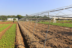 Neat vegetable field open greenhouse Royalty Free Stock Photography