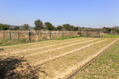 Neat vegetable field Royalty Free Stock Photos