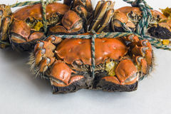 The neatly arranged delicious crab Stock Photography