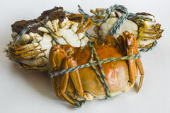 The neatly arranged delicious crab Stock Images