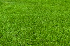 Neatly cut grass Stock Photo