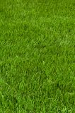 Neatly cut grass Royalty Free Stock Photography