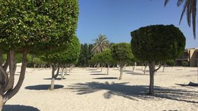 Neatly cutting trees in circle shape on empty sandy beach at summer morning. Scenic landscape summer sandy beach with palm and green trees stock video