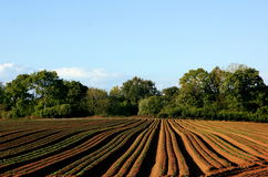 Neatly ploughed field. Stock Image