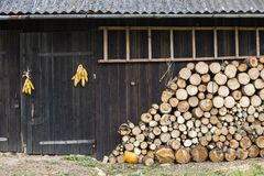 Neatly stacked big pile of chopped fire wood logs prepared for winter at vintage wooden barn wall with slate roof, ladder and corn stock photography