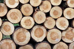 Neatly stacked firewood Stock Photo