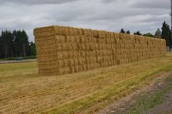 Stacked Hay bales near Albany, Oregon. These are neatly stacked hay bales in a field west of Albany, Oregon in the Willamette Valley under a cloudy sky Royalty Free Stock Images