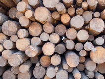 Neatly stacked round timber logs. In different sizes as a closeup Royalty Free Stock Photo