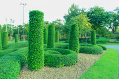 Neatly trimmed hedge Stock Photography