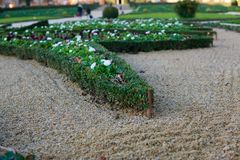 Neatly trimmed shrub in sand garden stock photos