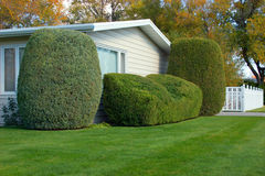 Neatly Trimmed Shrubs 2. Neatly trimmed shrubs adorn this yard royalty free stock photography
