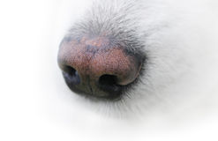 Neb of dog Stock Photos