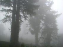 Nebbia Immagine Stock