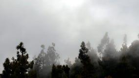 nebbia stock footage
