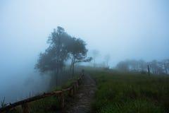 Nebbia all'allerta del campo del pino in Phu Soi Dao National Park Fotografia Stock