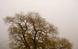 Nebbia con l'albero Fotografia Stock
