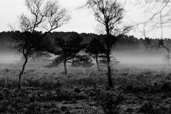 Nebbia degli alberi di mattina Immagini Stock