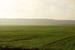 Nebbia del campo di mattina immagine stock libera da diritti