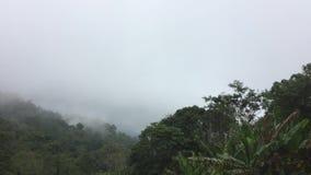 Nebbia del paesaggio di vista nella montagna della foresta archivi video