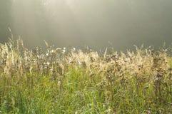 Nebbia del prato e del campo di mattina fotografie stock libere da diritti