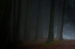 Nebbia della foresta Fotografia Stock
