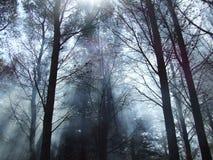 Nebbia della foresta Immagini Stock