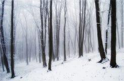 Nebbia della foresta immagini stock libere da diritti