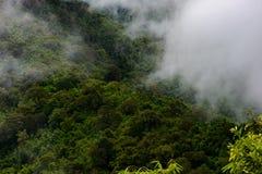 Nebbia della montagna scenica al thongphaphum Fotografie Stock