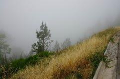 Nebbia densa in una foresta vuota vicino alla strada fotografia stock libera da diritti