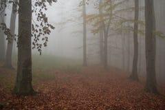 Nebbia di Abosolute Fotografia Stock Libera da Diritti