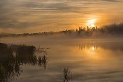 Nebbia di alba del lago dorata Immagini Stock