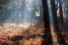Nebbia di autunno della felce di Brown Immagini Stock