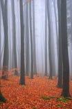 Nebbia di autunno in più forrest Fotografia Stock