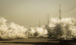 Nebbia di congelamento Fotografie Stock