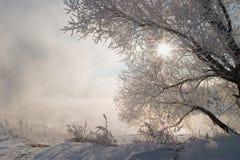 Nebbia di inverno Fotografia Stock Libera da Diritti