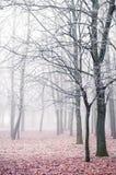 Nebbia di inverno Immagine Stock Libera da Diritti