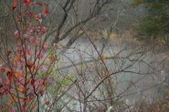 Nebbia di inverno sopra un fiume Fotografia Stock