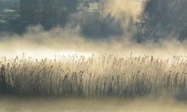 Nebbia di mattina…. Immagine Stock