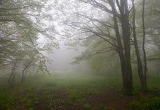 Nebbia di mattina Fotografie Stock
