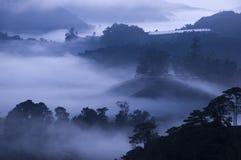 Nebbia di mattina all'azienda agricola del tè Fotografia Stock