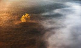 Nebbia di mattina che copre un albero giallo solo Immagine Stock