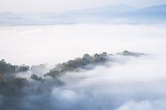 Nebbia di mattina e bella foresta Immagine Stock