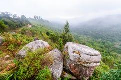 Nebbia di mattina in foresta Immagini Stock