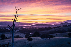 Nebbia di mattina in Goulburn River Valley in Victoria, Australia Fotografia Stock Libera da Diritti