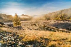 Nebbia di mattina in montagne Brina su erba e sugli alberi Fotografia Stock Libera da Diritti