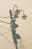 Nebbia di mattina nella città Immagini Stock